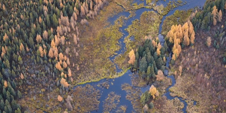 Autumn colours of the forest with a river running through it